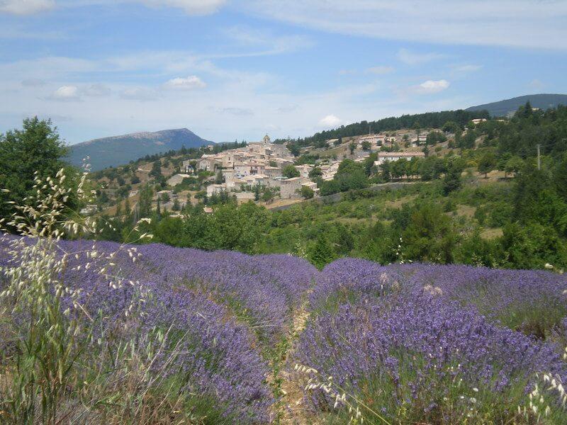 Thomas Bauer Frankreich Lavendelfeld vor Aurel