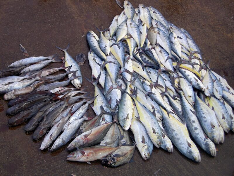 Fischmarkt Sri Lanka