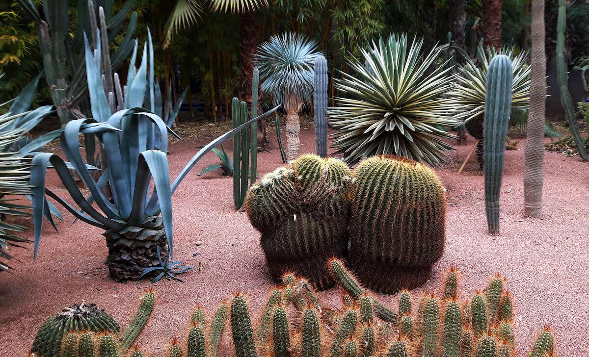 Jardin Majorelle - Copyright Karsten-Thilo Raab (8)