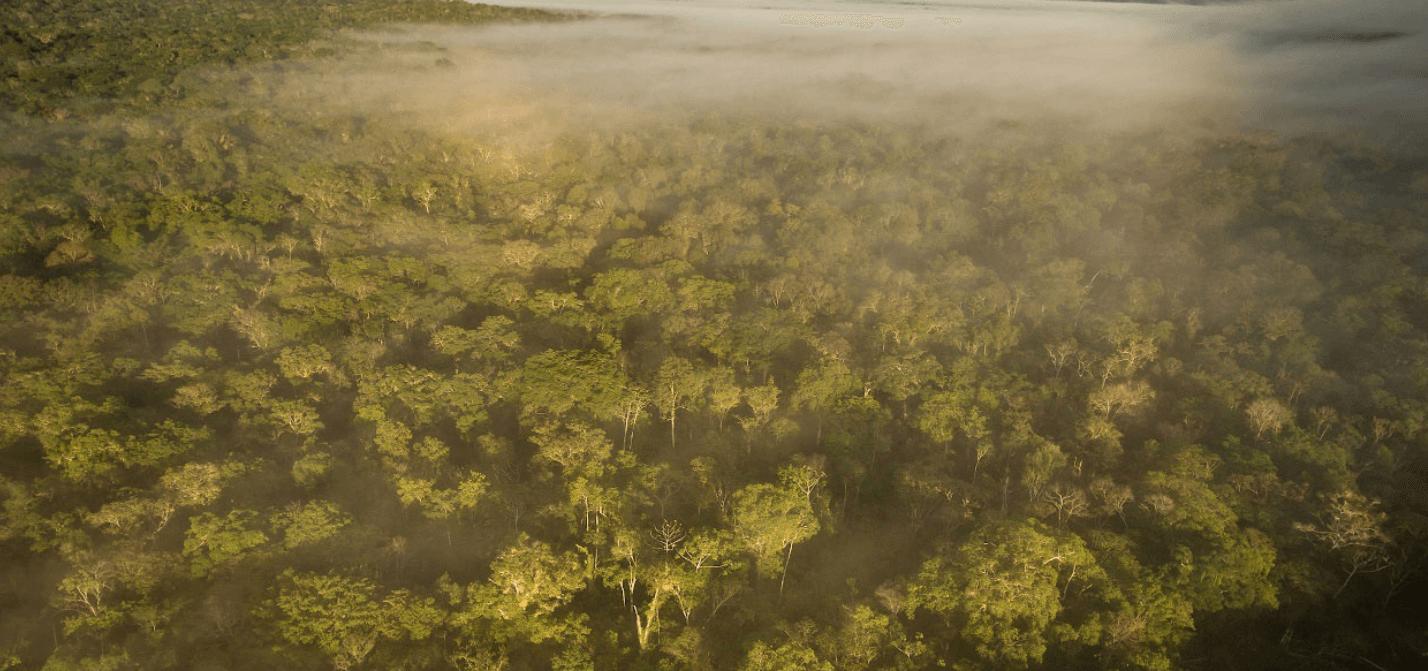 Weltwach Wald 2