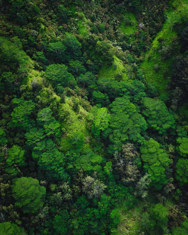 Weltwach Wald 3 kleiner
