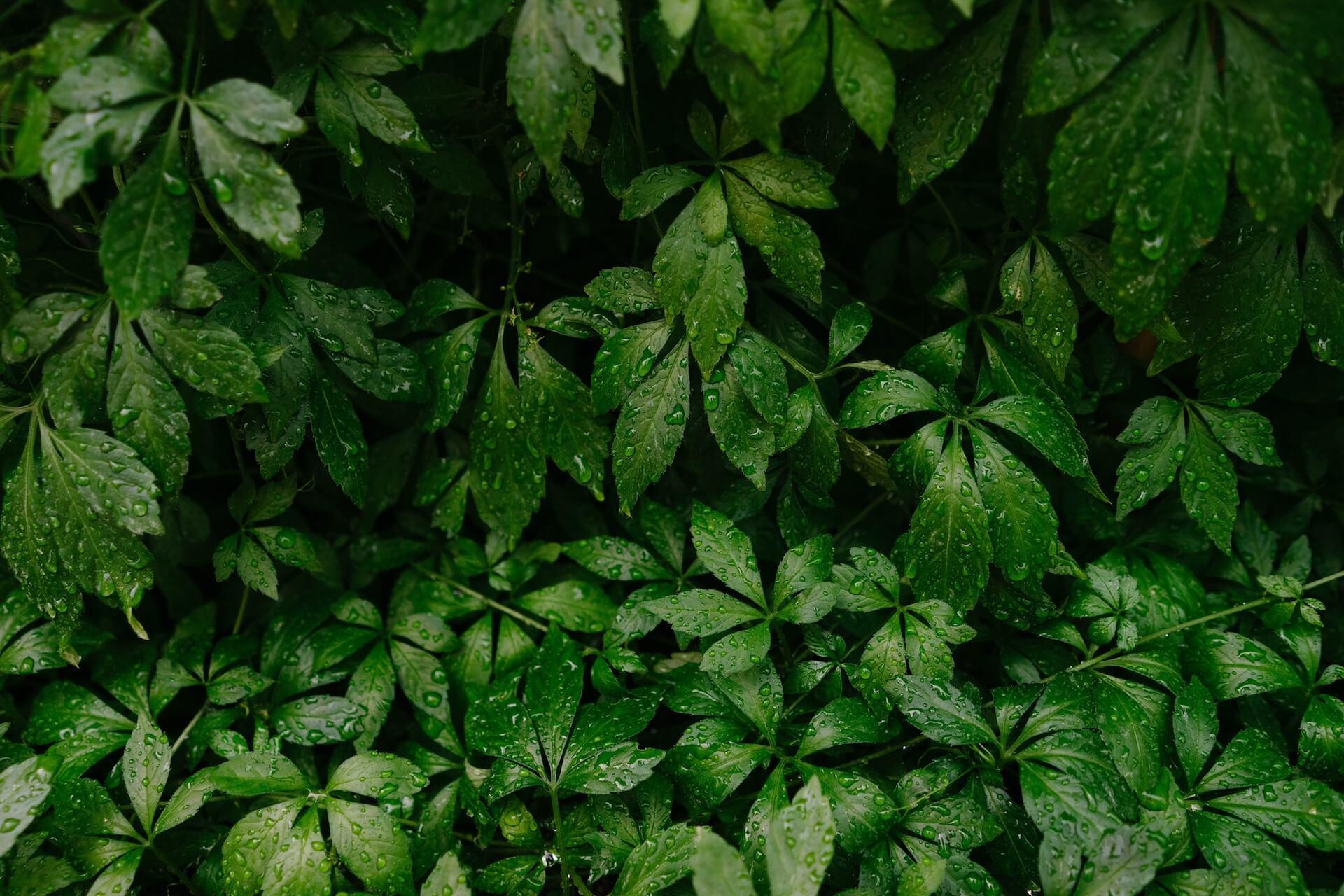 Weltwach Wald Blätter