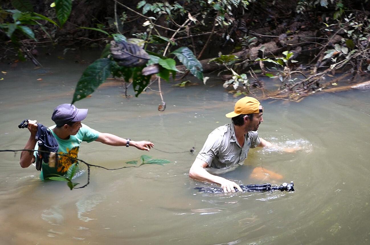 Amazonien York Hovest