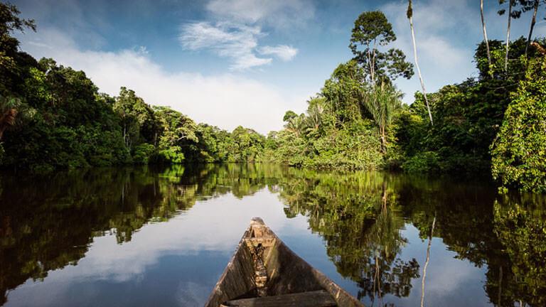 York Hovest Amazonien