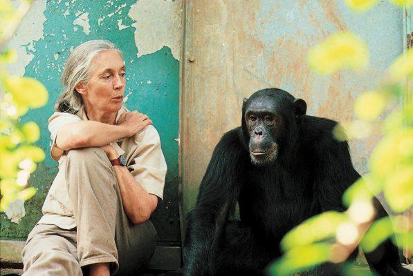 Jane Goodall Weltwach